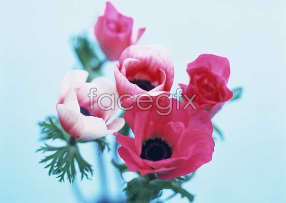 Flowers close-up 1754