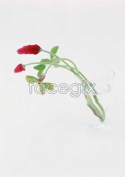 Flowers close-up 1773