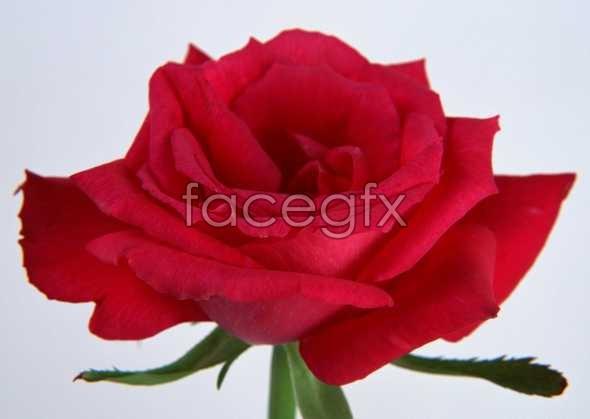 Flowers close-up 38