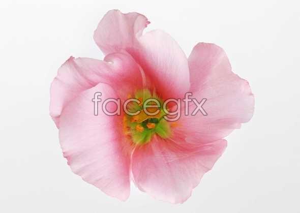 Flowers close-up 447
