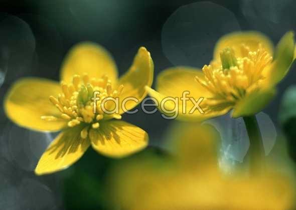 Flowers close-up 603
