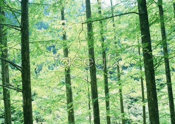 Jungle beauty of 31