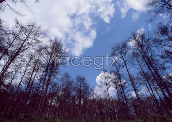 Jungle beauty of 576