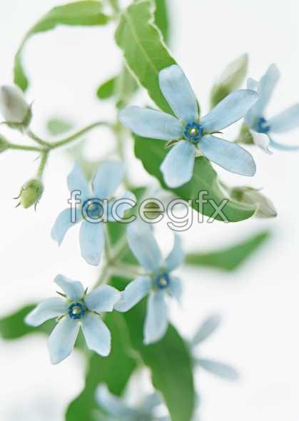 Small blue flowers flower arrangement