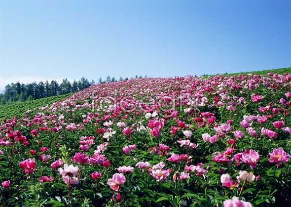 Thousands of flowers 569