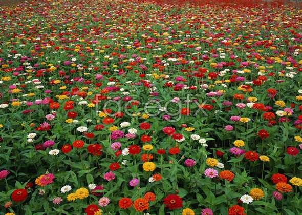 Thousands of flowers 585