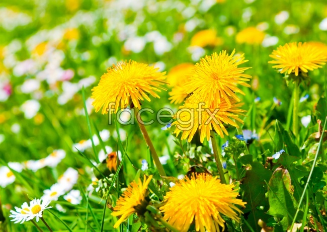 Beautiful Daisy high definition pictures