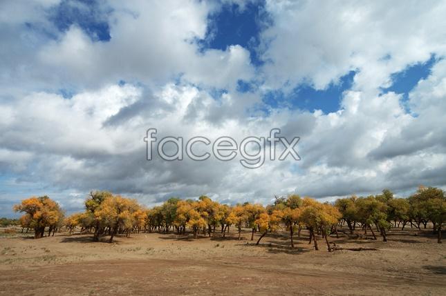 Desert forest desktop wallpaper