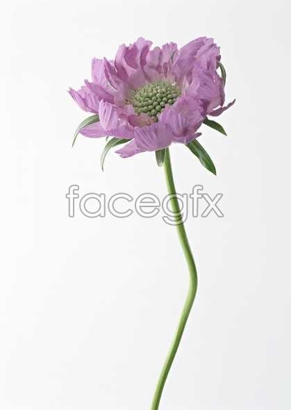 Flowers close-up 1459