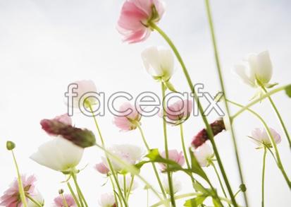Flowers close-up 2,056