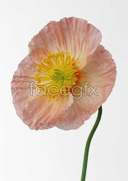 Flowers close-up 540