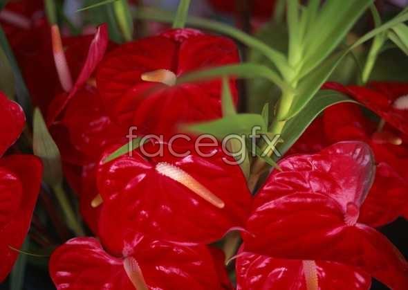 Flowers close-ups 725