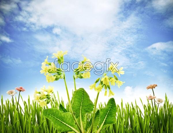 HD cauliflower pictures