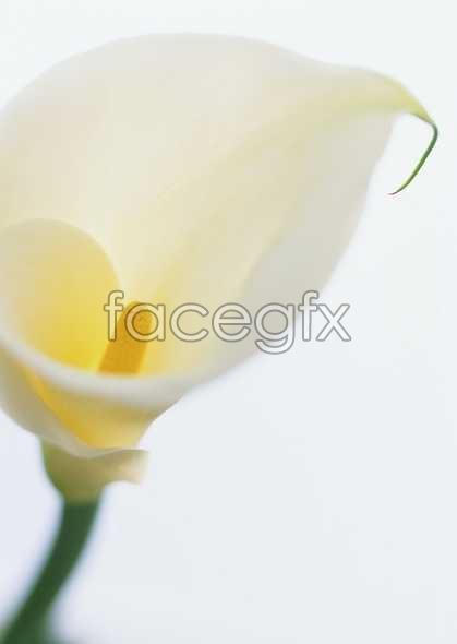 Flowers close-up 1662