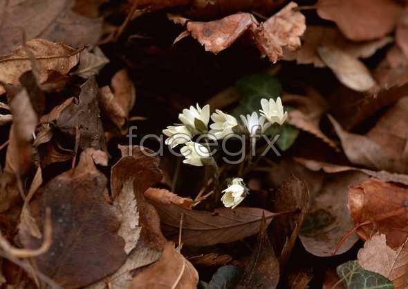 Flowers close-up 663