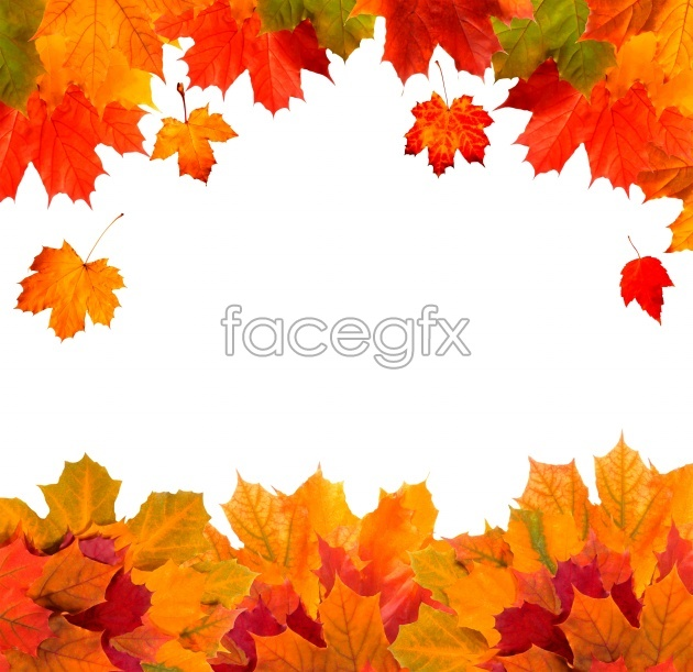 HD Maple Leaf Chinese Restaurant border picture