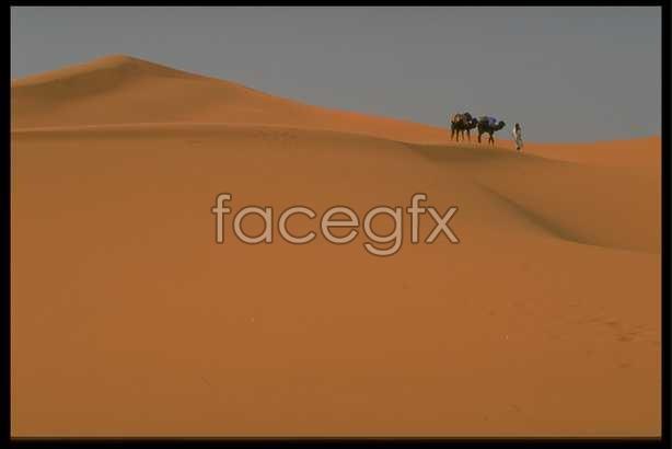 Desert beauty # 11