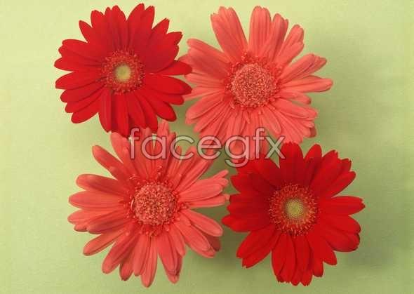 Flowers close-up 1029