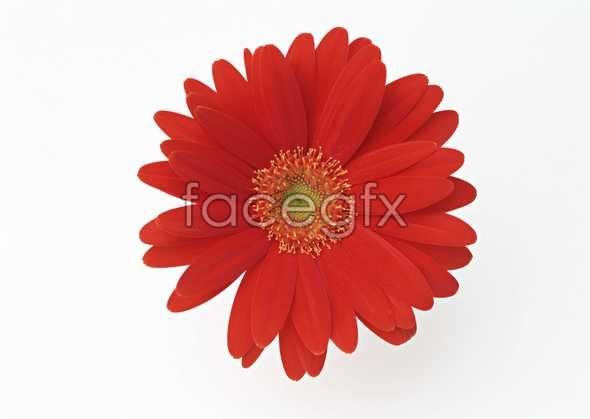 Flowers close-up 1355