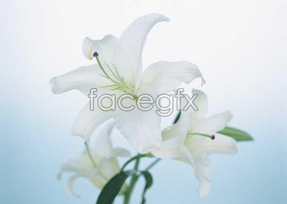 Flowers close-up 1753