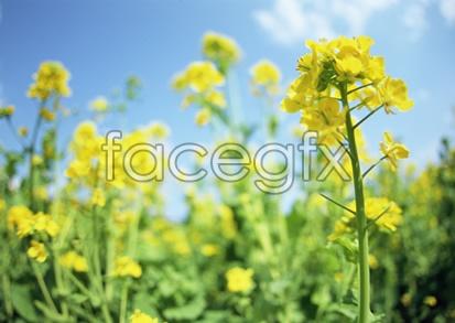 Flowers close-up 2,101