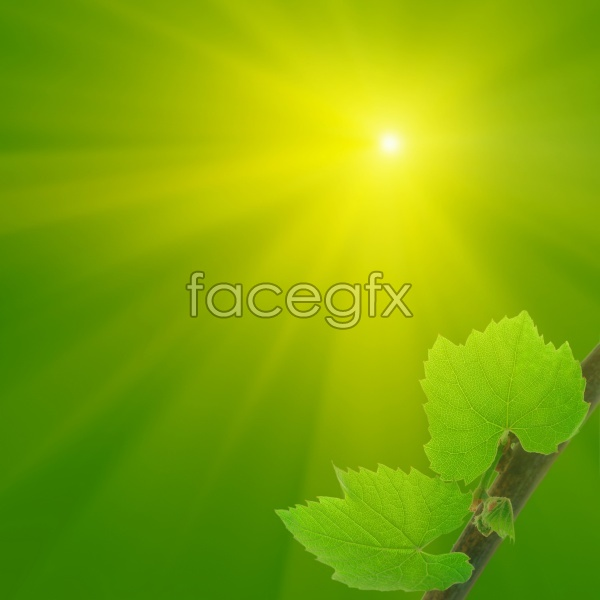 Green leaf material picture