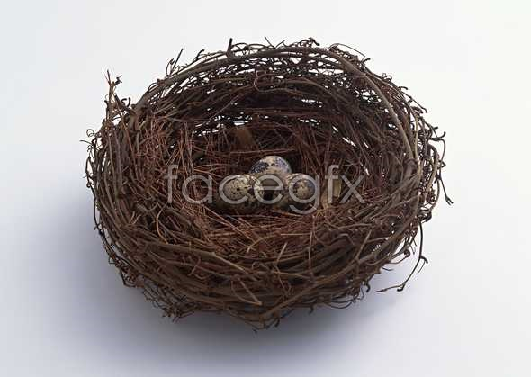 HD nest pictures