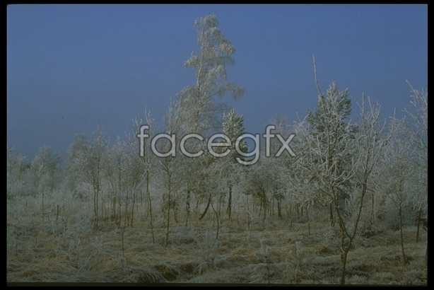 Ice 648