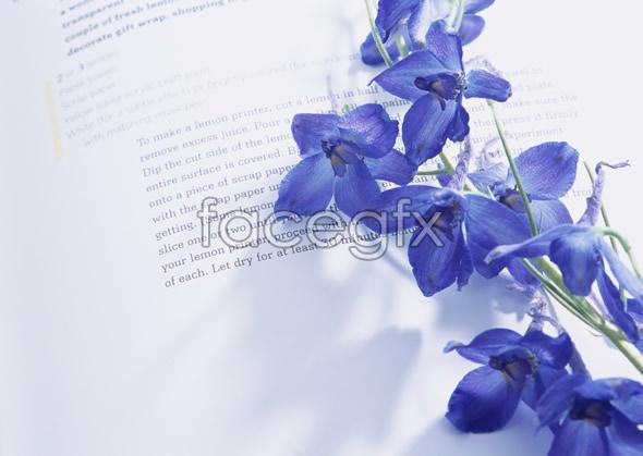Indoor flower 120