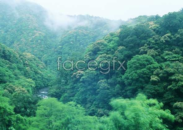 Jungle beauty of 197