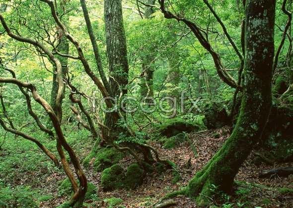 Jungle beauty of 380
