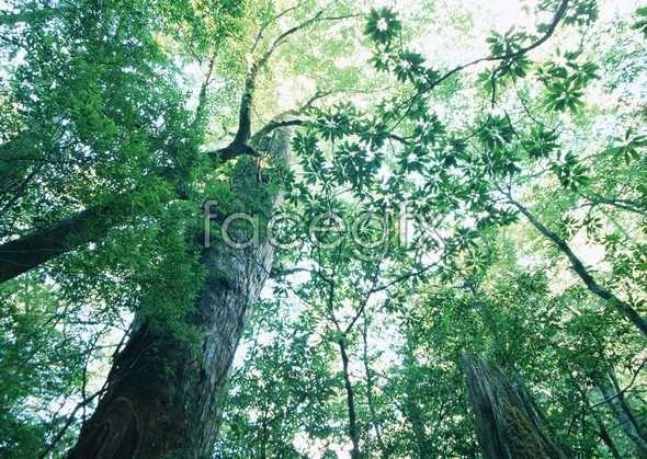 Jungle beauty of 97