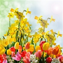 Yellow winter Jasmine picture