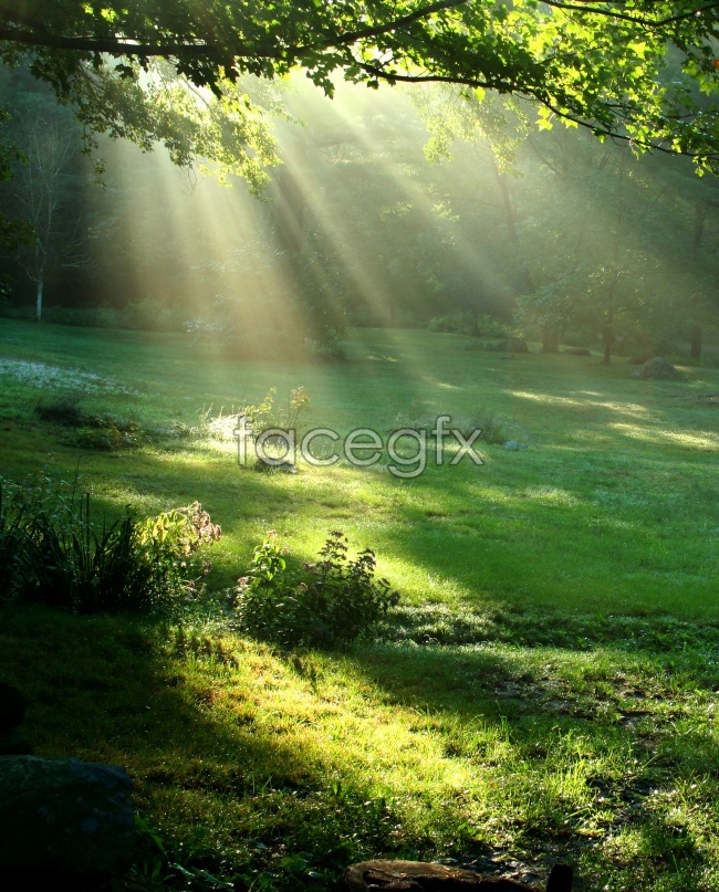 Wood beam of sunlight picture