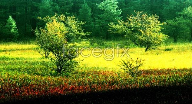 Dream meadow landscape picture