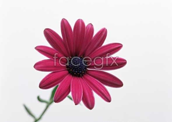 Flowers close-up 1370