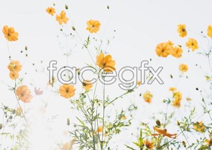 Flowers close-up 2037
