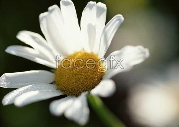 Flowers close-up 629
