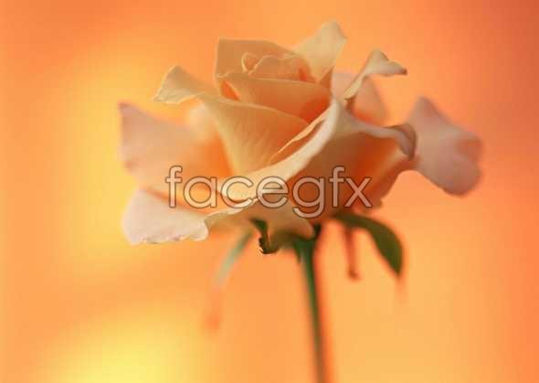 Flowers close-ups of 1433