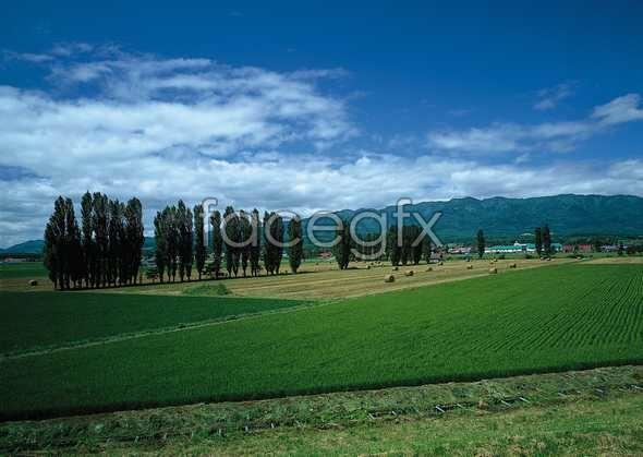 Idyllic rural 23