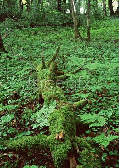 Jungle beauty of 377