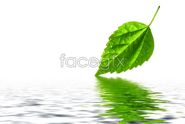 Leaf with reflection pictures