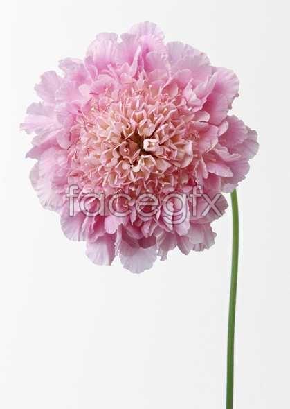 Flowers close-up 535