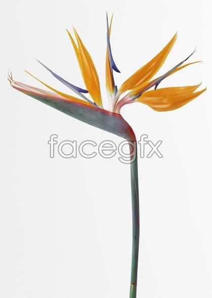 Flowers close-up 578