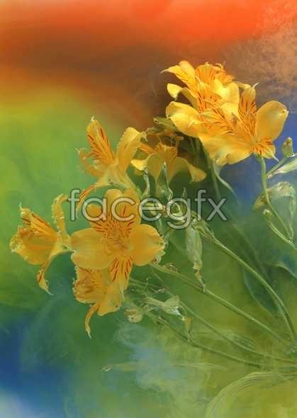 Flowers close-up 902