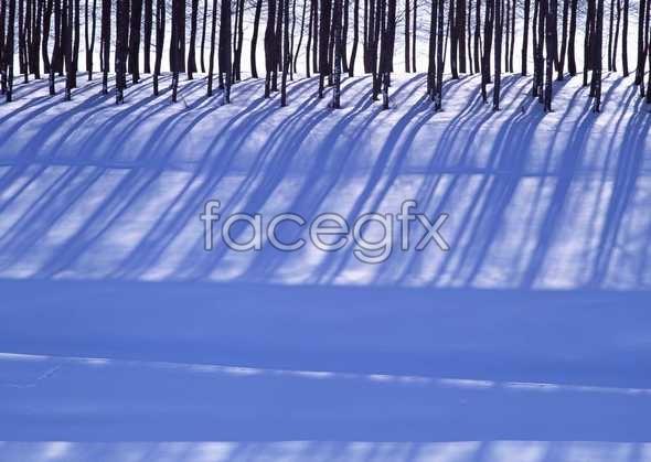 Frozen 28