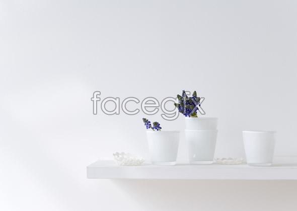 Indoor flower 57