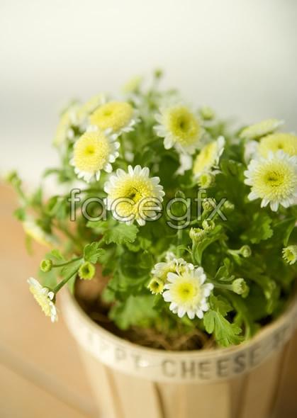 Indoor flower 65