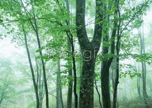 Jungle beauty of 142
