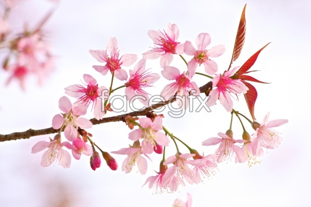 Pink flower pictures HD